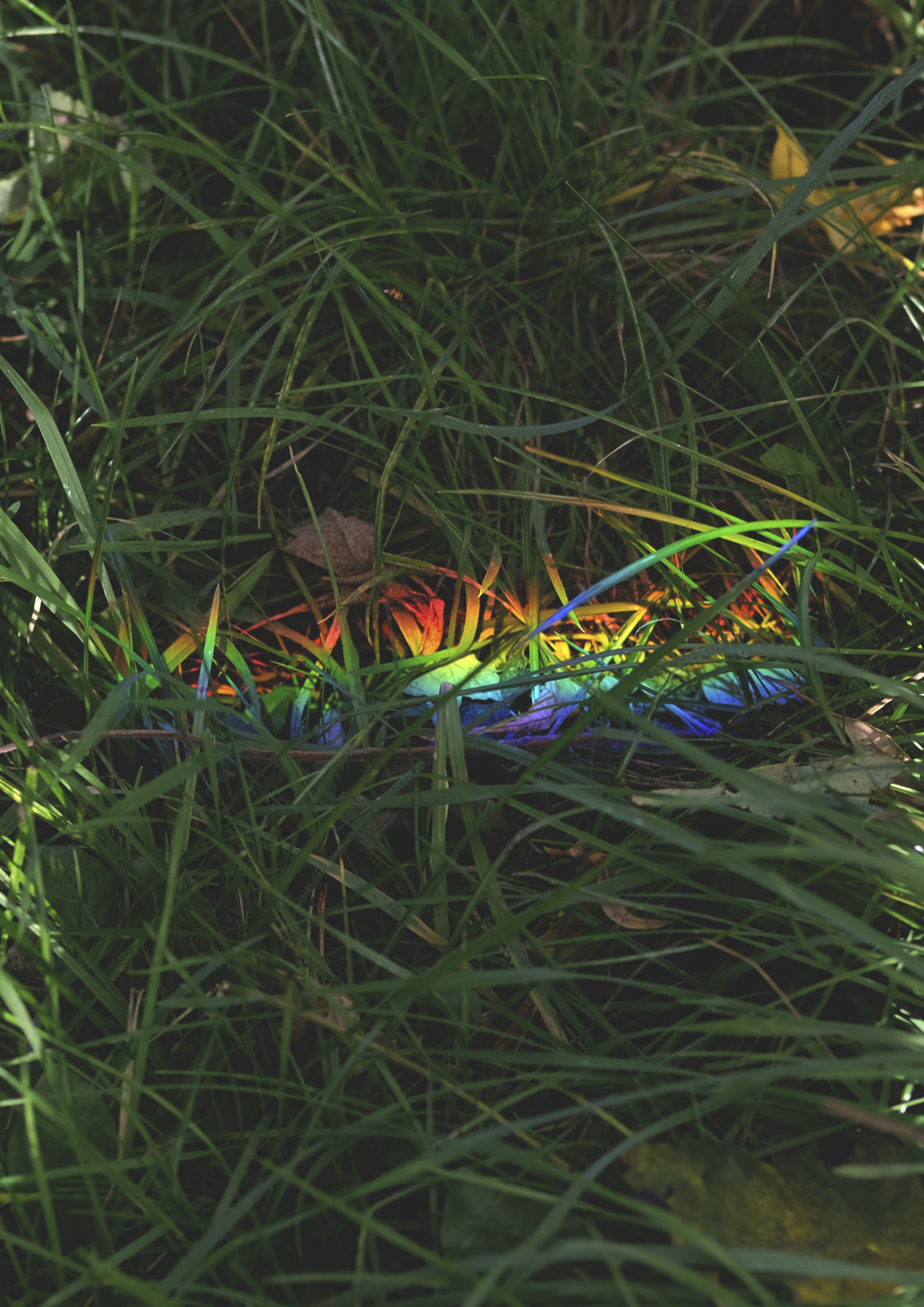 Copy of rainbow_grass