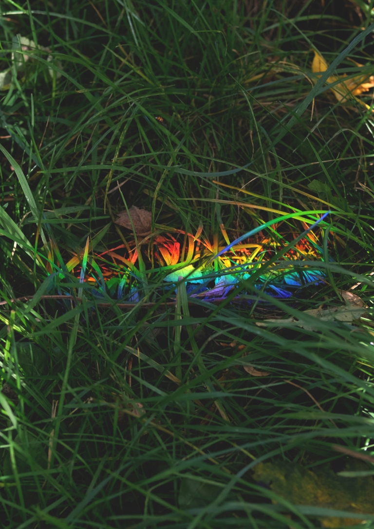 Copy of rainbow_grass